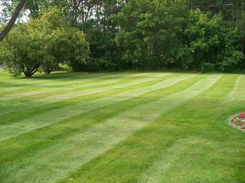 Lawn Care Grant MN