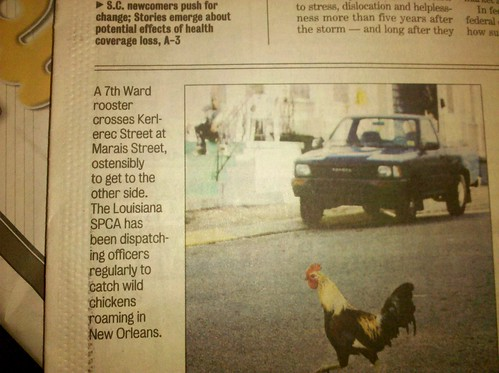 Seventh Ward Rooster