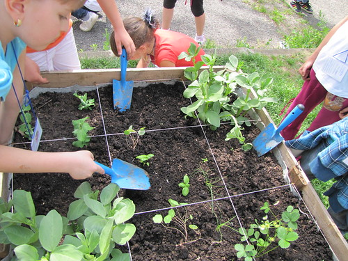 La primavera con i bambini miraorti for Piantare piselli
