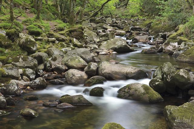 Calm Stream | Flickr - Photo Sharing!