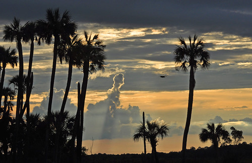 sunset nature clouds outdoor palm palmtrees vulture