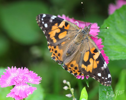 ny newyork canon butterfly upstatenewyork saranaclake paulsmithscollege mygearandme 100mmmacrof28lisusm
