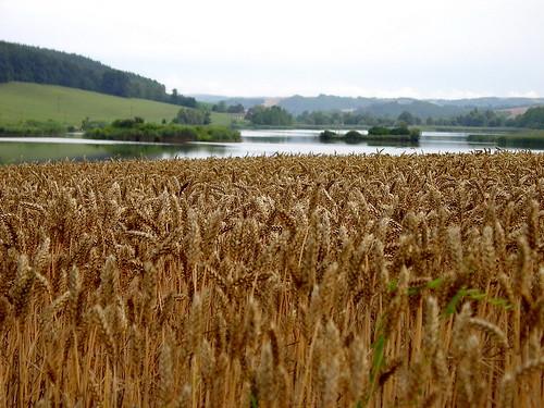 lake nature landscape cornfield hungary hill