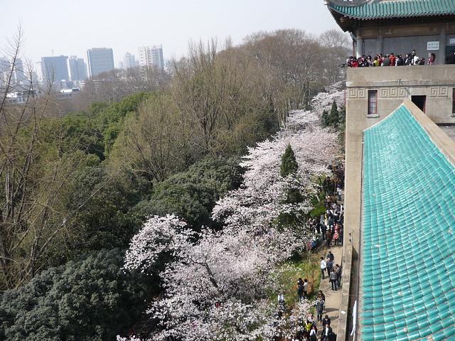 秒速武厘米-武汉大学的樱景校红