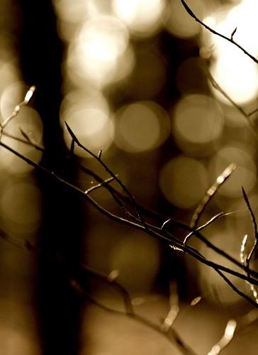 sunset forest spring branch sonnenuntergang branches wald frühling zweige zweig
