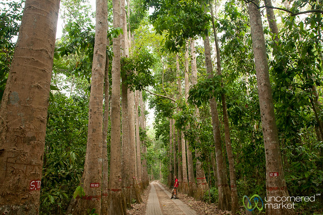Bicycling Through Lawachara National Park - Bangladesh