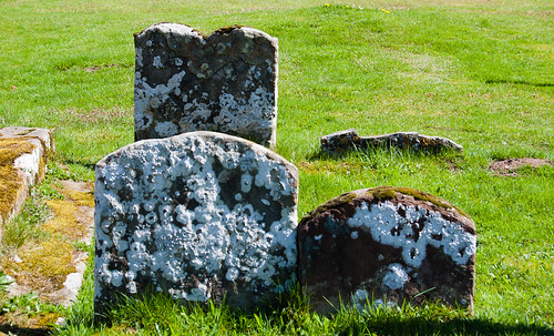 Lichen on gravestones: Tong
