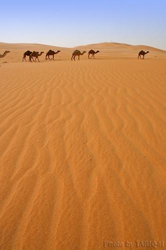 texture landscape sand waves desert dunes camel riyadh saudiarabia الصحراء الرياض صحراء رمال جمل ابل رمل طعس نياق المملكةالعربيةالسعودية canon400d الرمل ناقة خطوط نفود الرمال كثبان تموجات canonefs18200mmf3556is تموج نفد