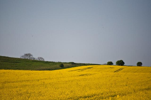 Wiltshire - Flickr CC flissphil