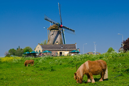 Mill Windlust - Nootdorp