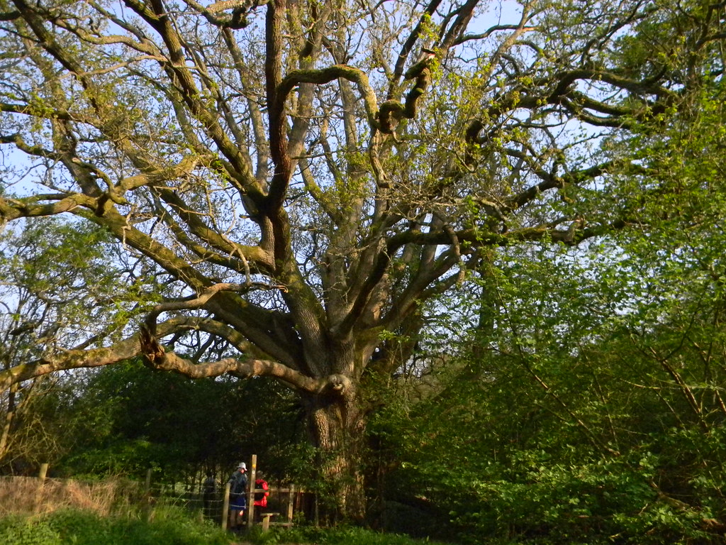 Big Tree Frant to Tunbridge Wells
