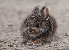 [フリー画像素材] 動物 1, 哺乳類, 兎・ウサギ ID:201209171000