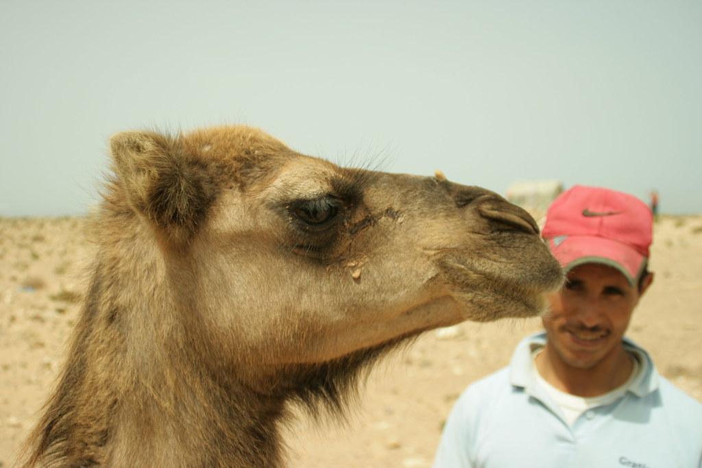 Camell i guardia