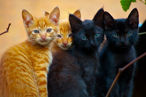 cats group photo