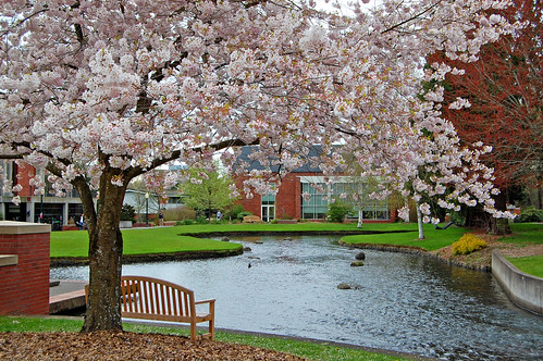 Sakura at Willamette University 2011 | by Edmund Garman