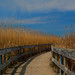 Oak Hammock Boardwalk by Gail Lamm