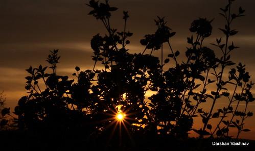 sunset canon lensflare sunflare canon28135usmis canon50d darshanvaishnav