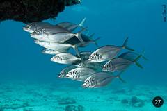 fuerteventura (diving)
