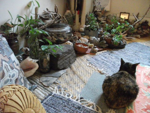 Photo for Indoor gardening with cats