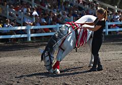 rodeo(0.0), western riding(0.0), bull(0.0), equestrian vaulting(0.0), jockey(0.0), barrel racing(0.0), animal sports(1.0), event(1.0), equestrian sport(1.0), tradition(1.0), sports(1.0), race(1.0), traditional sport(1.0),