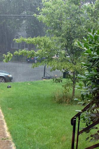 happy thing: summer rain