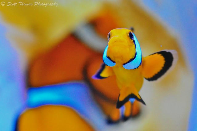 Macro Nemo