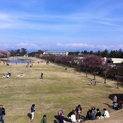 立山連峰と桜と植物園