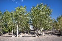 The University of Arizona Environmental Research Laboratory