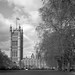 Parliament with Trees by Summicron20/20
