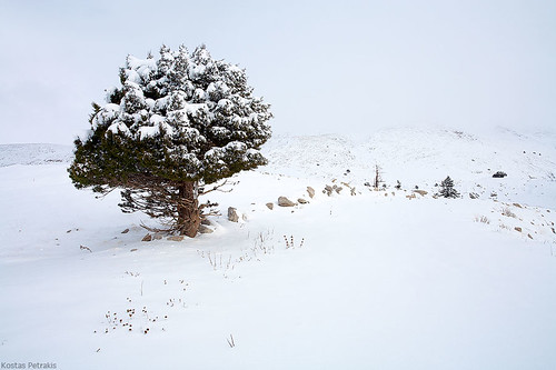 winter mountain snow storm tree landscape photography hellas greece parnassos 2010 kostas petrakis fthiotida
