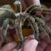Iain holding Tarantula by Iain A Wanless