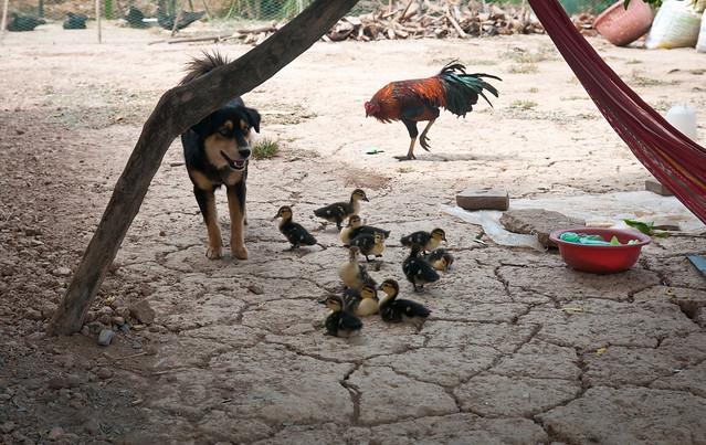 Guardian Angel Dog Rescue
