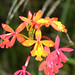 orchid, Valle Nacionale, Oaxaca, Mexico, 2004_12_17 037.jpg por maholyoak