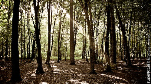 forest training slovenia strength endurance maribor superfit betnava
