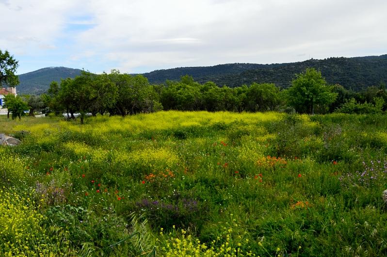 lara-vazquez-madlulablog-landscape