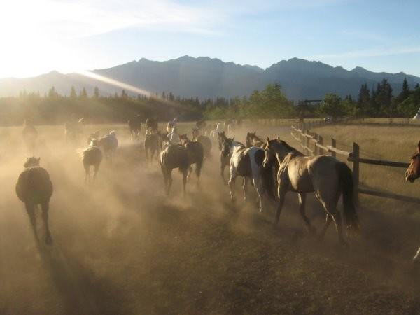 Équitation dans les Rocheuses Canadiennes (Colombie-Britannique, Canada)