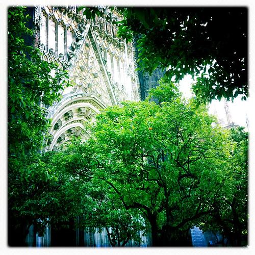 Sevilla Cathedral | Orange Trees