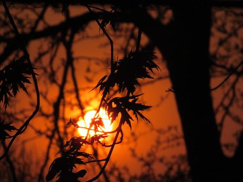 sunset leaf spring leafs kansassunset leafhelicopter