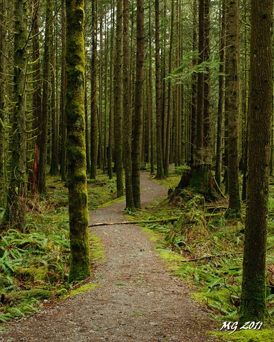park trees canada tree green nature forest moss nikon rainforest trail