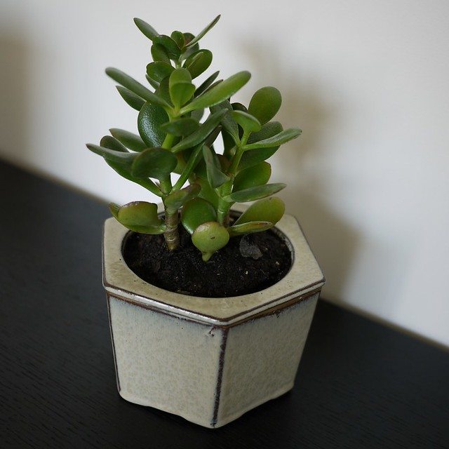 23 plantas para ter dentro de apartamento com muito charme for Plantas para dentro de casa sombra