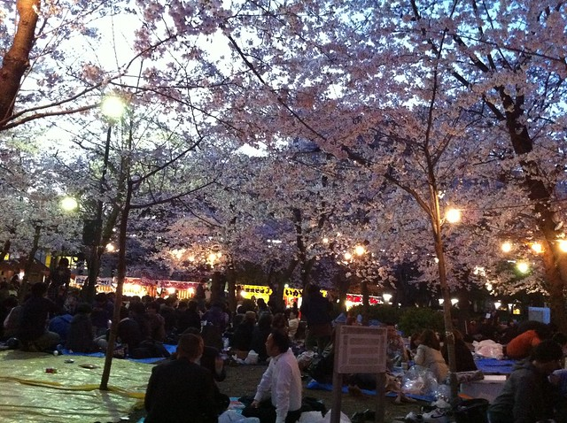 Hanami in Tsurumai in Nagoya-shi, Japan. Photo by Keight Beaven. All rights reserved.