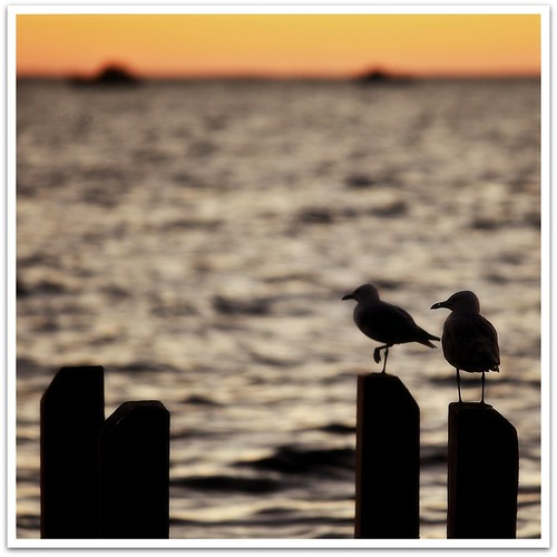Two Birds by cisco 