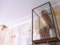 owl on display at village coffee in utrecht