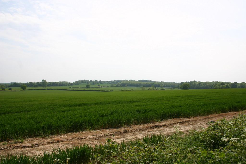 A fieldy vista