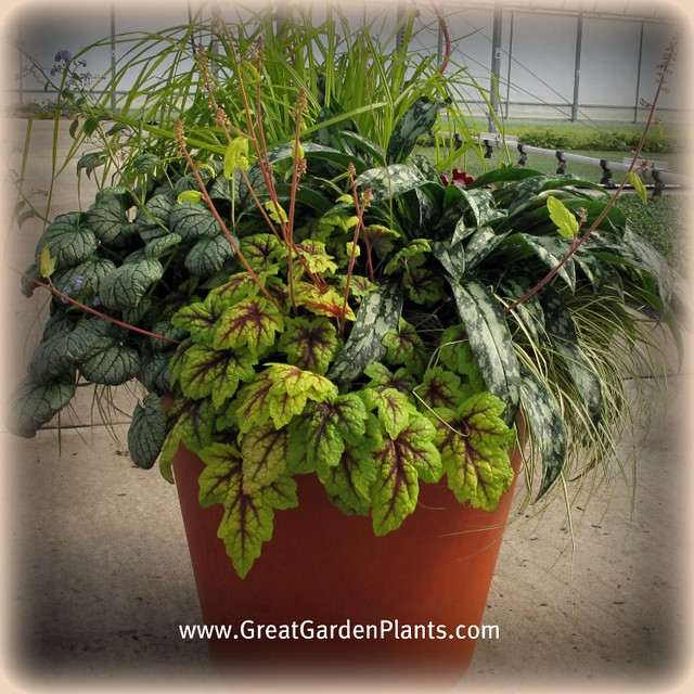 Shade container gardening flickr photo sharing - Container gardens for shade ...
