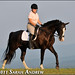Dressage with Kat and Chip, a Tennessee Walking Horse by Rock and Racehorses