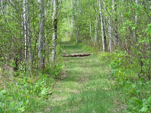 log path fallen