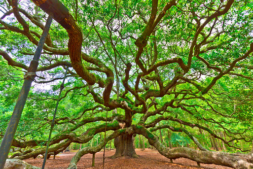 sc angel canon landscape oak south charleston carolina dslr 1022 t2i