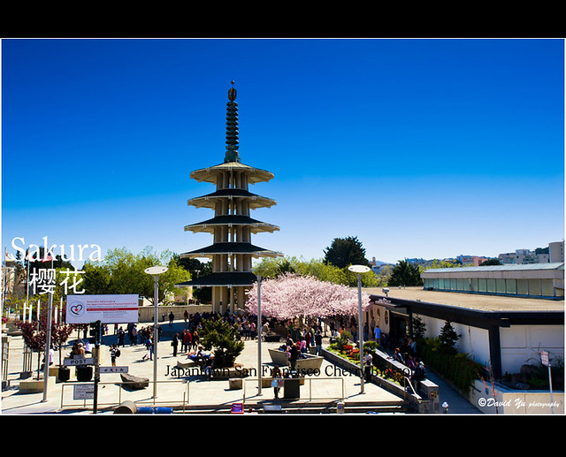 japantown san francisco cherry blossom sakura flickr photo sharing. Black Bedroom Furniture Sets. Home Design Ideas