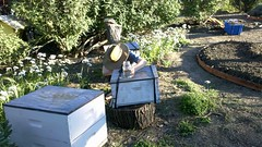 backyard, garden, yard, beehive,
